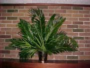 Palm Sunday altar vase